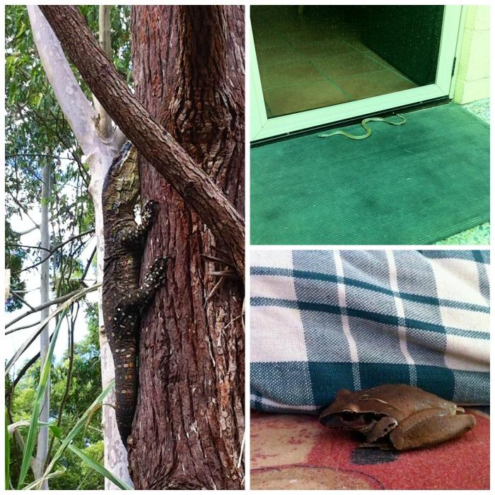 A sinistra un goanna, a destra un serpentello davanti alla porta di casa e una rana sul divano. | JustReadTheWorld