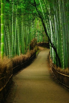 Bamboo Forest | Sagano (Pinterest)