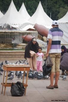 Bimba che dà da mangiare ai piccioni | Souq moderno.