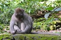 Monkey Forest a Ubud