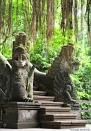Nella Monkey Forest - Bali