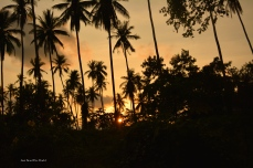 Sunset through the palmtrees